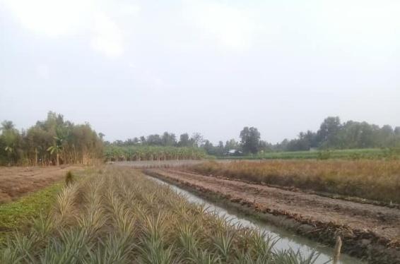Bán gần 2000m2 tại xã Vị Tân phía trước có kênh lớn mà giá chỉ 450 triệu